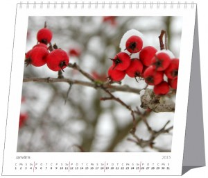 Galda-kalendāri-4